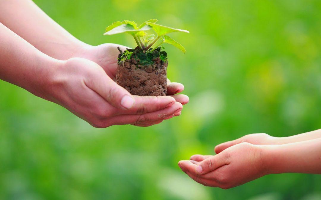 Foglio 306: Evangelizzare = ricevere