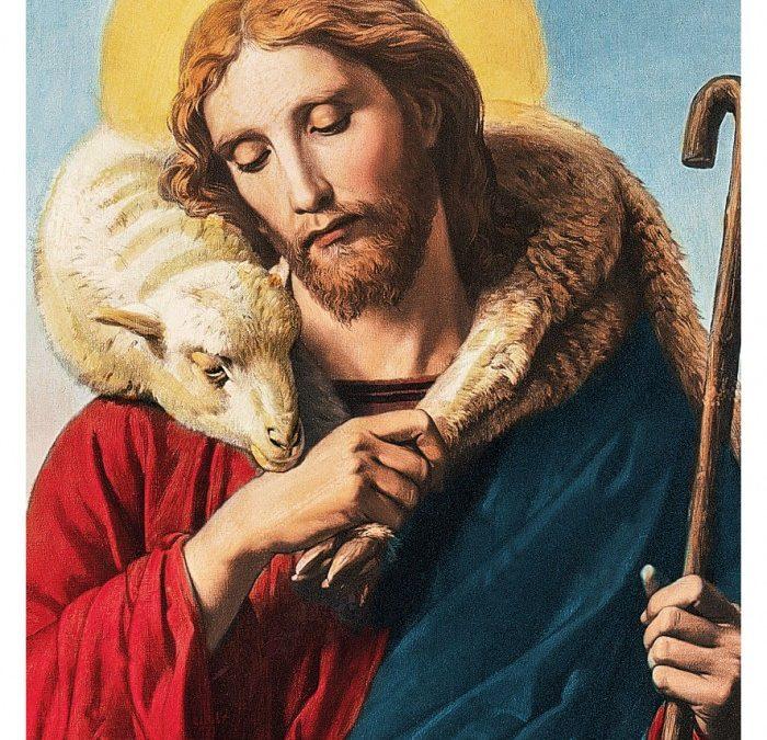 Insegnamento 336 – Le mie pecore ascoltano la mia voce